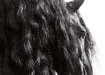 Horse Series 11 Michigan  2014 Photography - James Houston