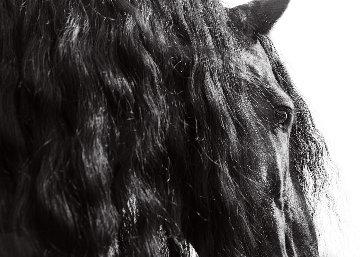 Horse Series 11 Michigan  2014 Panorama - James Houston