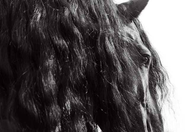 Horse Series 11 Michigan  2014 Photography by James Houston