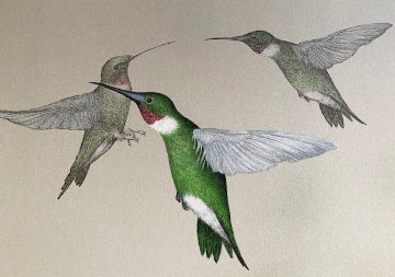 Hummingbird 1993 Limited Edition Print - Frank Howell