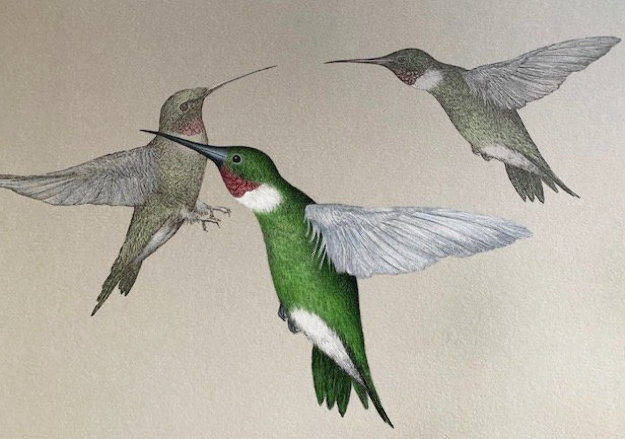 Hummingbird 1993 Limited Edition Print by Frank Howell