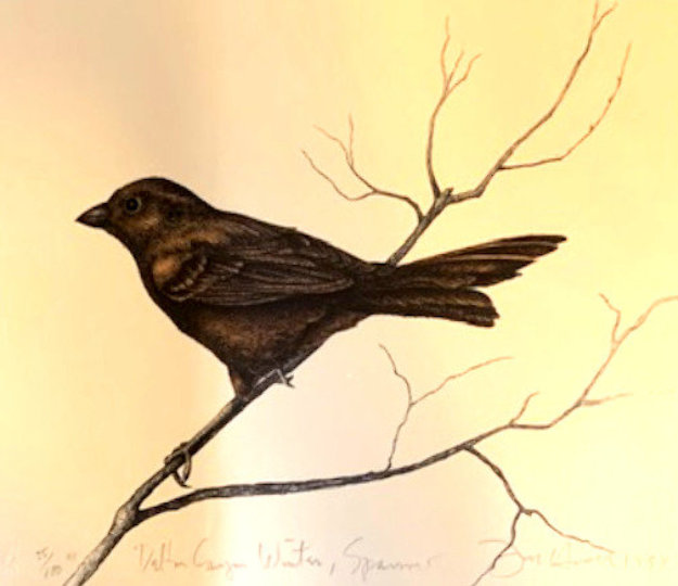 Dalton Canyon Winter Sparrow HC 1994 Limited Edition Print by Frank Howell