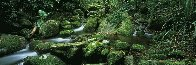 Rainforest Magic Panorama by Peter  Jarver - 1