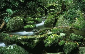 Rainforest Magic Panorama - Peter  Jarver