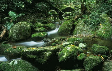 Rainforest Magic Panorama by Peter  Jarver