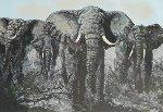 Elephant Stand 1972  60x72 Original Painting - Mark King