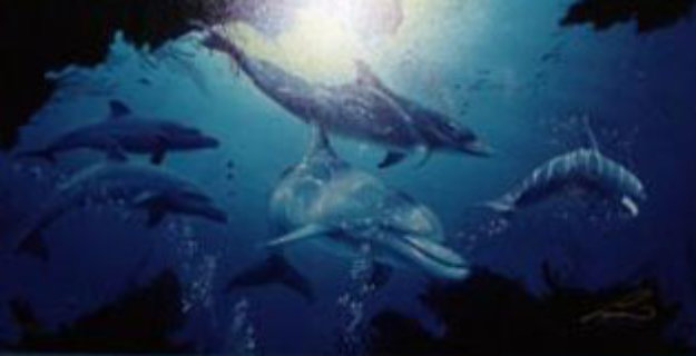 Five Dolphins 1998 Limited Edition Print by Christian Riese Lassen