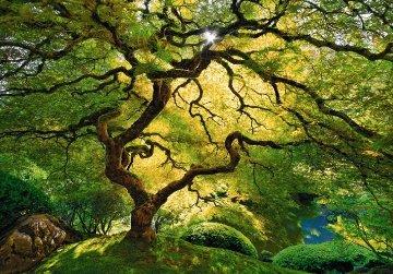 Inner Peace (Oregon) Panorama - Peter Lik
