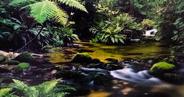 Mount Lewis Rainforest, Australia Panorama - Peter Lik