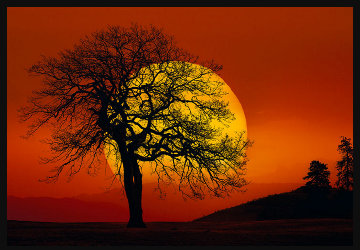 In Search of the Sun (Centerville, Washington) 1.5M Huge Panorama - Peter Lik