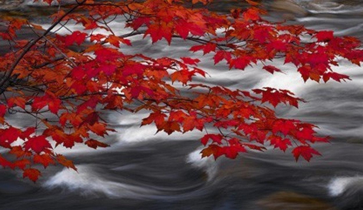 River of Zen 1.5M Huge Panorama by Peter Lik