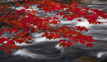 River of Zen Panorama by Peter Lik