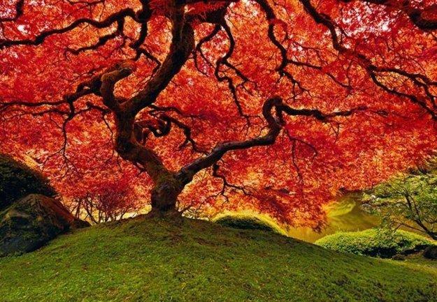 Tree of Life (Oregon) Panorama by Peter Lik