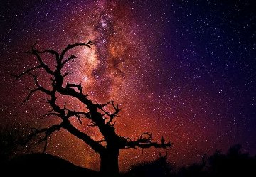 Tree of the Universe (Mauna Kea, Big Island, Hawaii)  Panorama - Peter Lik