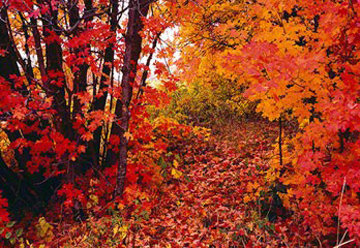 Wonderland  Panorama - Peter Lik