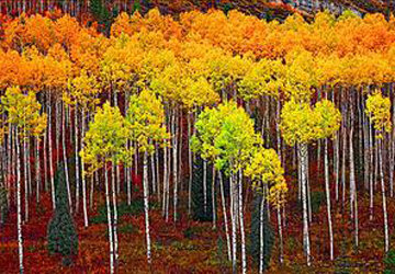 Picturesque Panorama by Peter Lik
