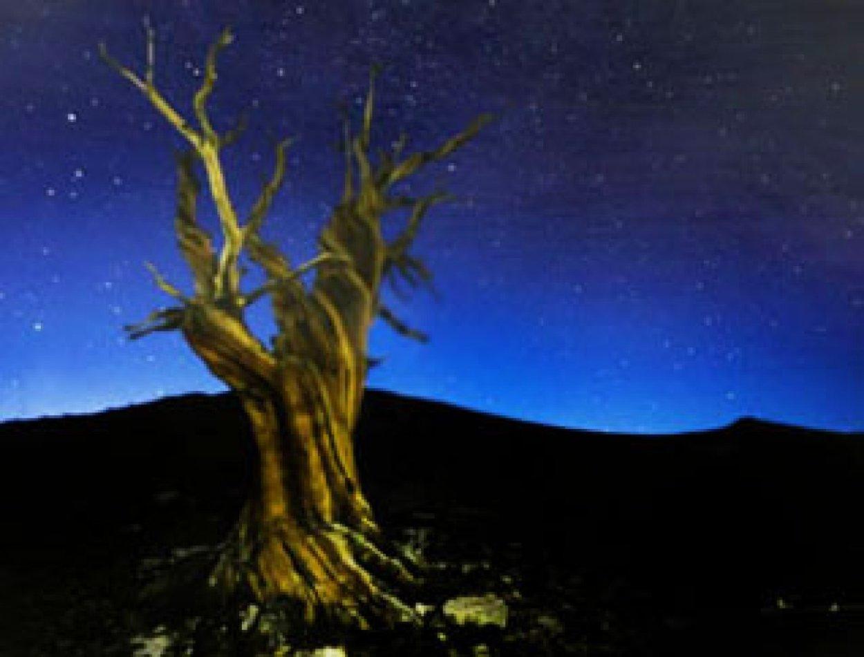 Starry Night Panorama by Peter Lik