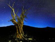 Starry Night Panorama by Peter Lik - 0