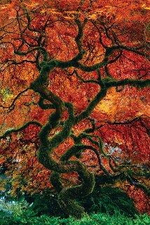 Infinity Tree Panorama - Peter Lik