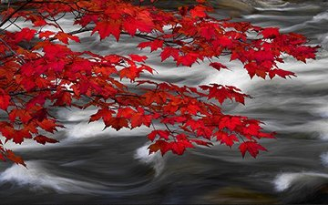 River of Zen AP 2M Super Huge Panorama - Peter Lik