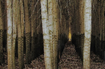 Endless Forest  Panorama by Peter Lik