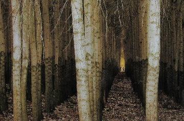 Endless Forest (Boardman, Oregon) Panorama - Peter Lik