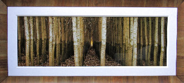 Endless Forest (Boardman, Oregon) 2M  Huge Panorama - Peter Lik