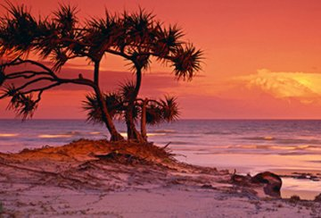 Pandanus Twilight 2003 Panorama by Peter Lik