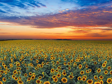 Summer Dreams Panorama - Peter Lik