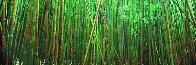 Bamboo (Pipiwai Trail Hana Hawaii) 2M Super Huge Panorama by Peter Lik - 1