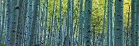 Endless Birches Colorado AP 2M Huge Panorama by Peter Lik - 0