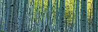 Endless Birches Colorado AP 2M Super Huge Panorama by Peter Lik - 0