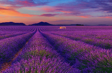 Le Reve (Valensole, France) Panorama by Peter Lik