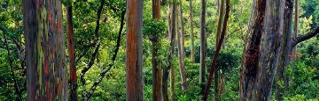 Painted Forest Panorama by Peter Lik