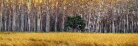 Golden Silence 2M Super Huge Panorama by Peter Lik - 1