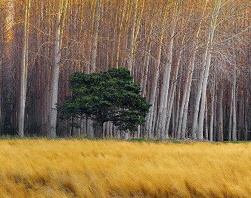Golden Silence   Panorama - Peter Lik