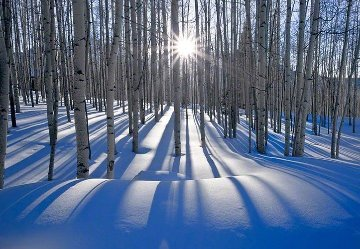 Sunlit Birches (Telluride, Colorado) Panorama by Peter Lik