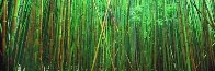 Bamboo (Pipiwai Trail Hana Hawaii) 2M Super Huge Panorama by Peter Lik - 2
