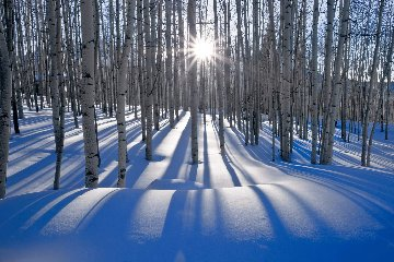 Sunlit Birches (Telluride, Colorado) Panorama - Peter Lik