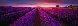 Splendour Panorama by Peter Lik - 2