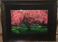 Tree of Dreams (Washington State) Panorama by Peter Lik - 2