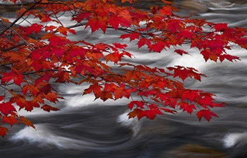 River of Zen Panorama - Peter Lik