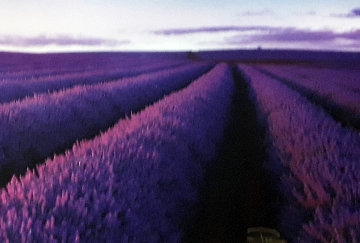Lavender Fields Panorama by Peter Lik