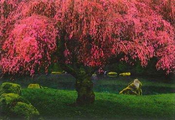 Tree of Dreams Panorama by Peter Lik