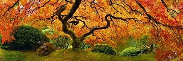 Tree of Zen Panorama by Peter Lik