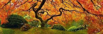 Tree of Zen 1.5M Huge Panorama - Peter Lik