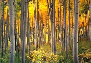 Golden Dawn Panorama - Peter Lik