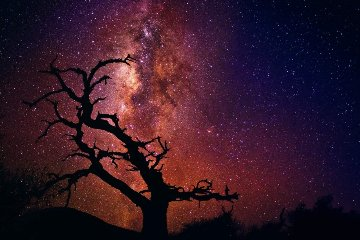 Tree of Universe (Mauna Kea, The Big Island. Hawaii) 1.5M Huge! Panorama - Peter Lik