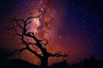 Tree of Universe (Mauna Kea, The Big Island. Hawaii) Huge! Panorama - Peter Lik