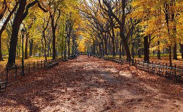 Central Park (Manhattan, NY) 1.5M Huge Panorama - Peter Lik